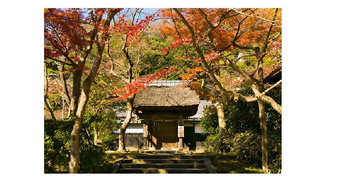 北鎌倉で紅葉とともに深まる秋をめぐるふらっとお散歩旅!!