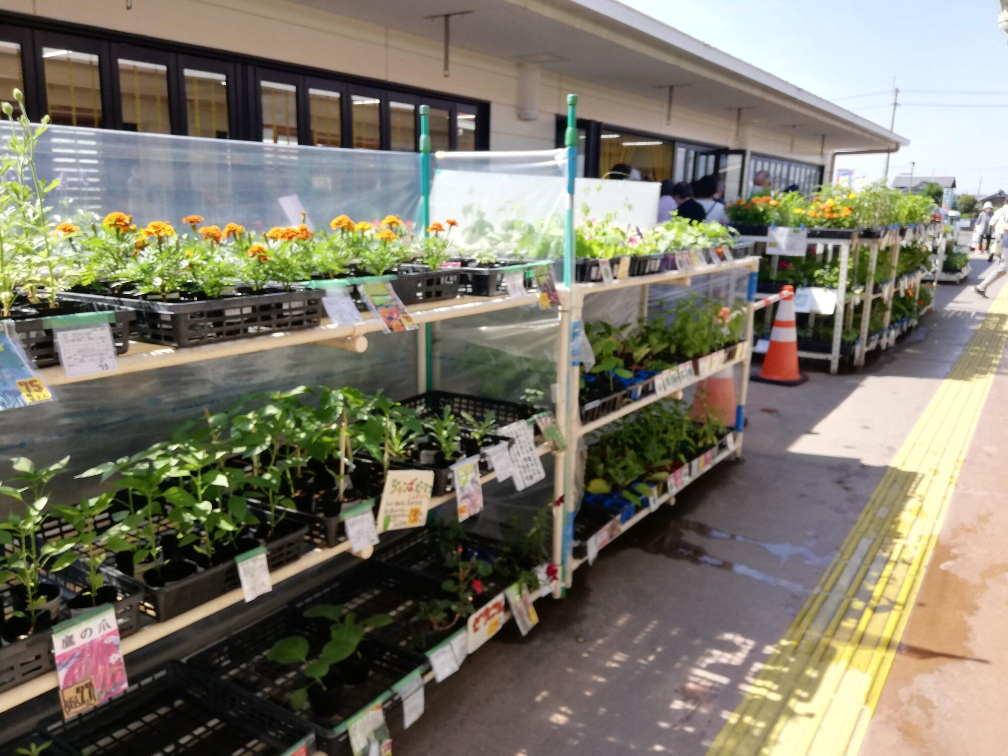 種類豊富な花苗、野菜苗、ハーブ苗