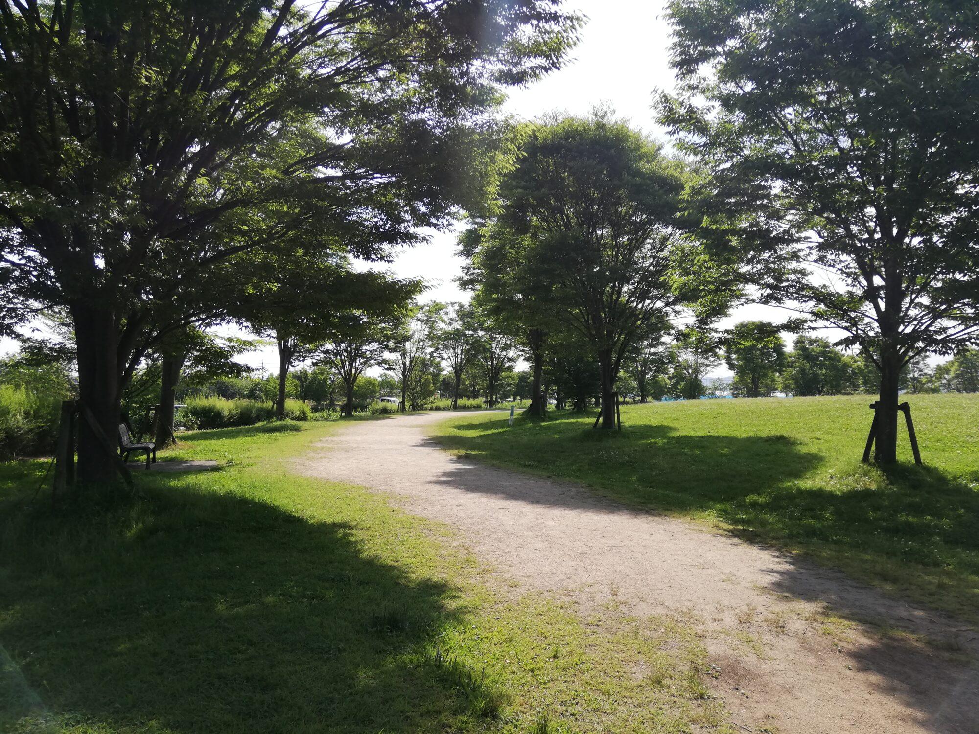 地球市民の森『散歩道』